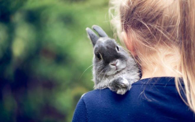 Кролик сидит на плече у девочки