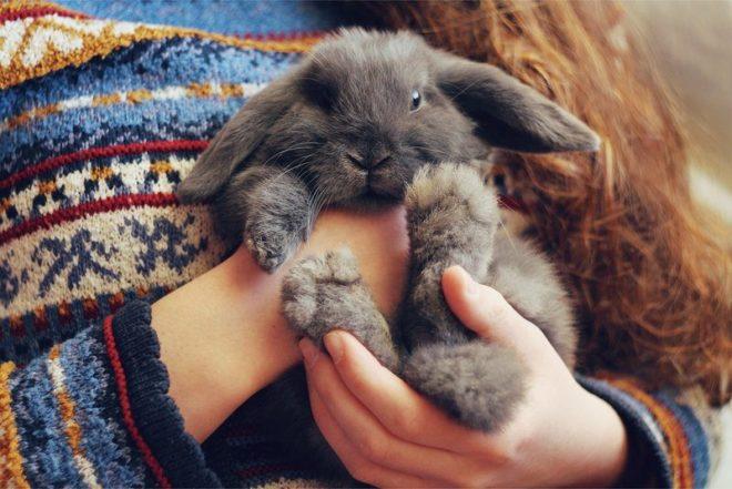 Ручной кролик