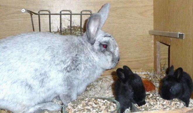 Мама крольчиха с детенышами