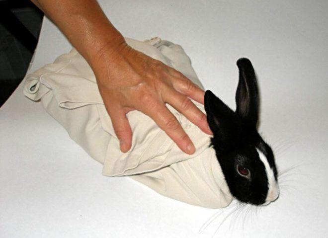 Заматываем кролика в полотенце