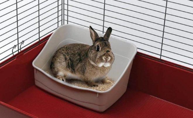 Как научить кролика ходить в туалет