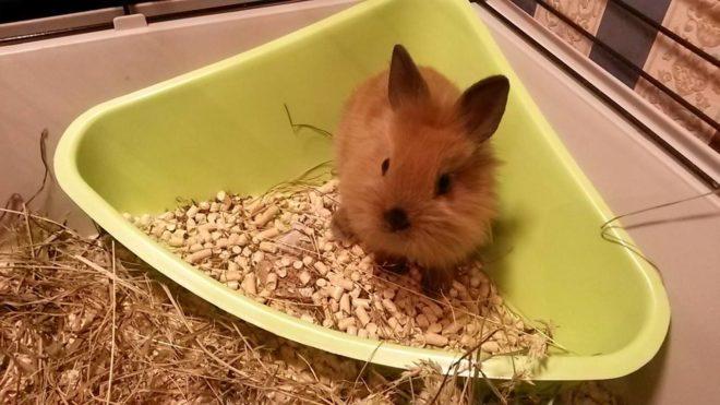 Кролик в горшке