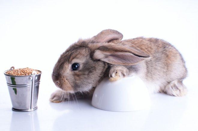 Можно ли кроликам давать пшеницу