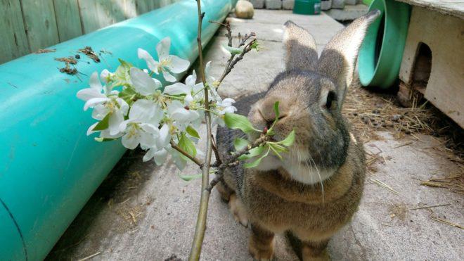 Веточный корм для кролика