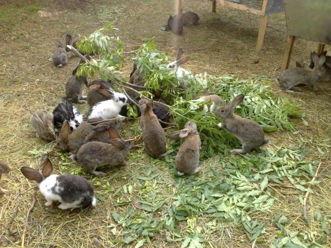 Кролики кушают листву и ветки
