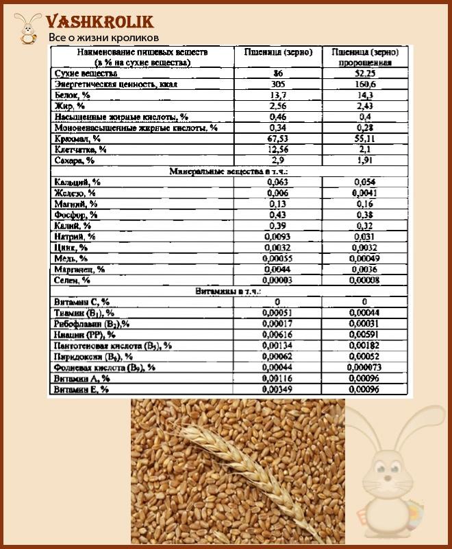 Польза пшеницы для кроликов