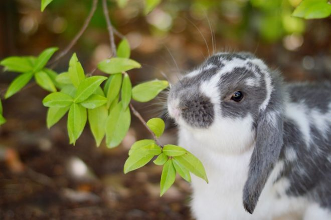 Какие ветки можно кроликам