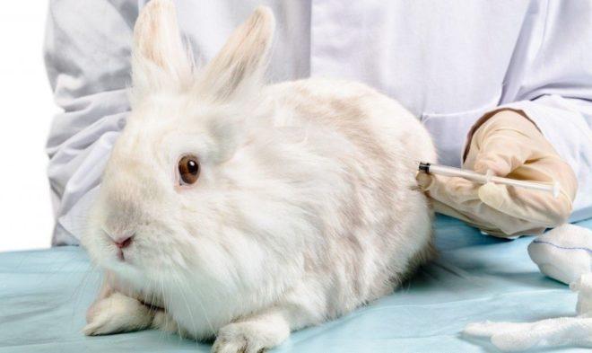 Профилактика заболеваний у кролов