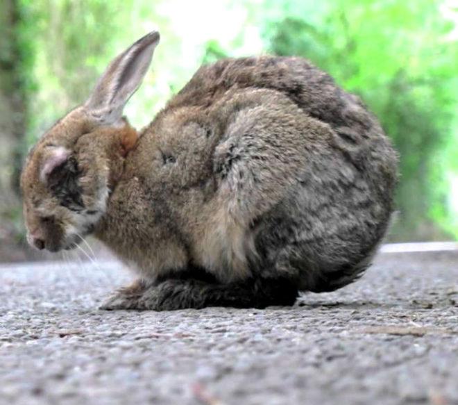 Кролик зболел