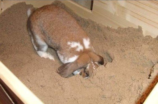 Кролик роет песок