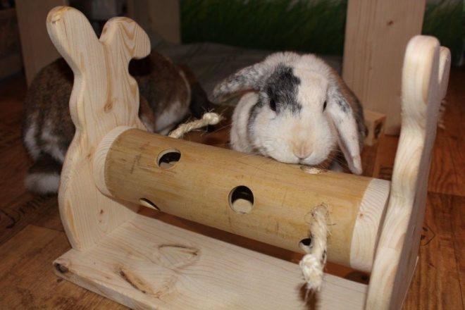 Игры на логику для кроликов