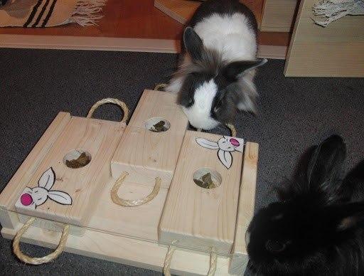 Логические игры для кроликов