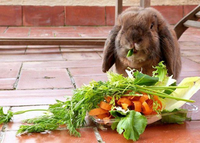 Природные витамины для кроликов