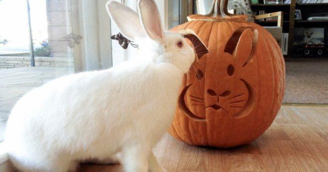 Кролик с тыквой