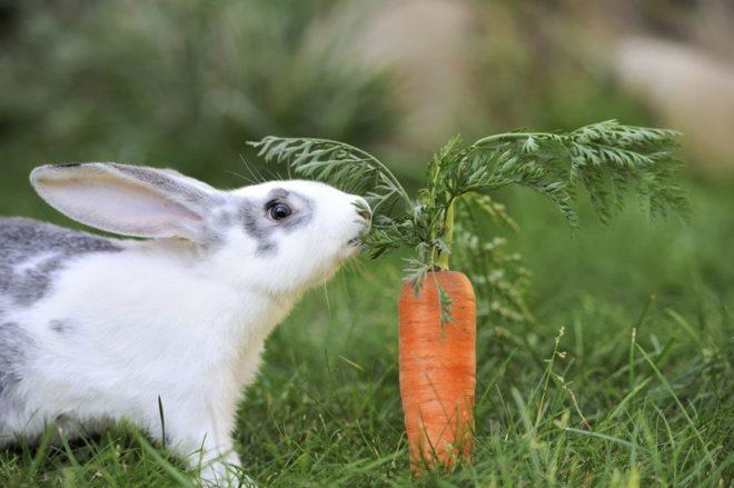 Какие витамины нужны кролику