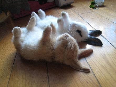 В какой позе спят кролики