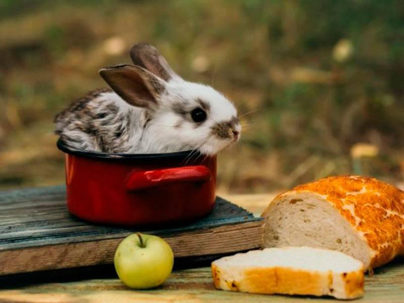 Хлеб для кролика