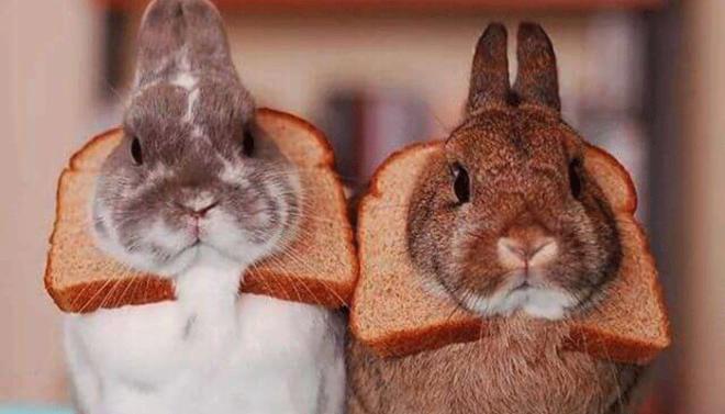 Какой хлеб можно кролику