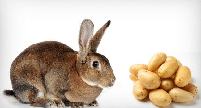 Можно ли кролику картошку