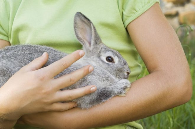 Кролик сидит на руках