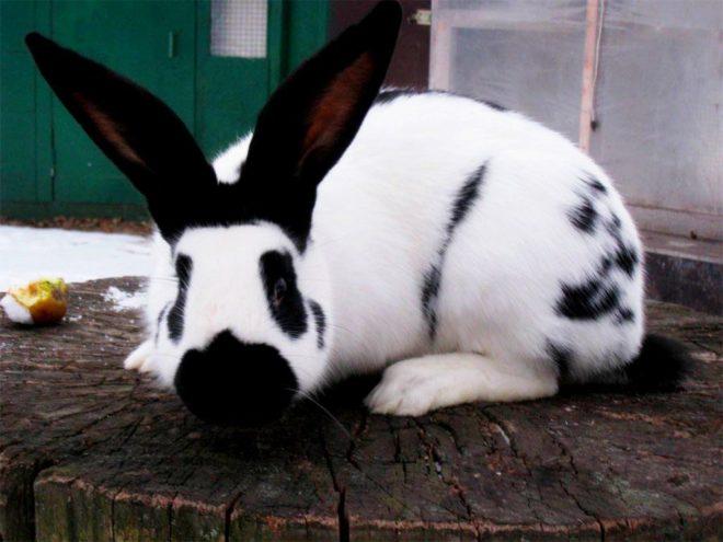 Кролик строкач сидит на пеньке