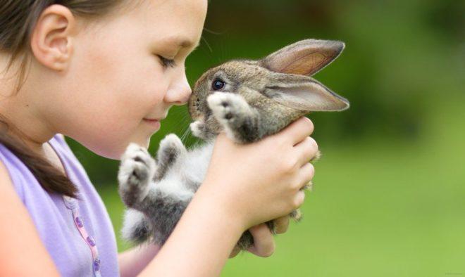 Как проявляется аллергия на кролика у детей
