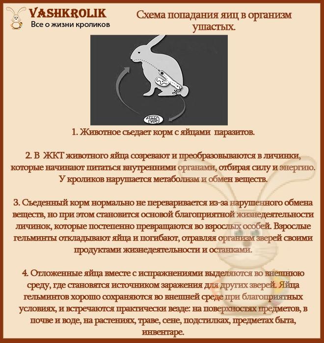 Как глисты попадают в организм кролика
