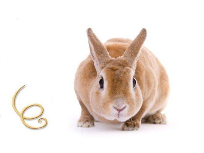 Гельминты у кролей