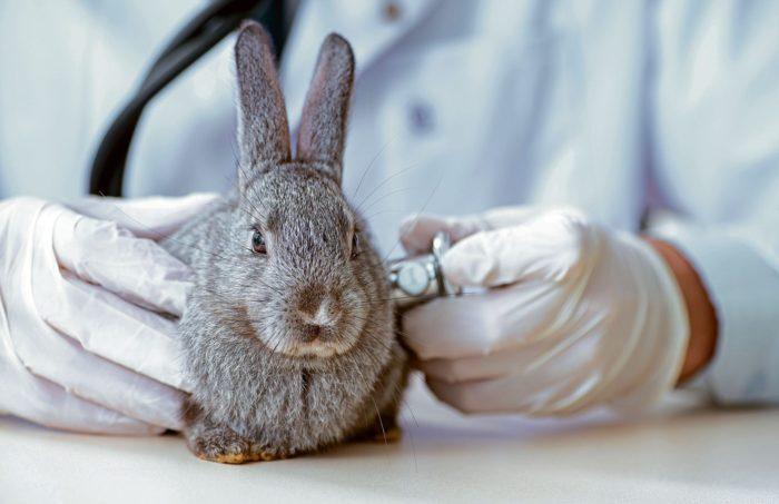 Осмотр кролика у врача