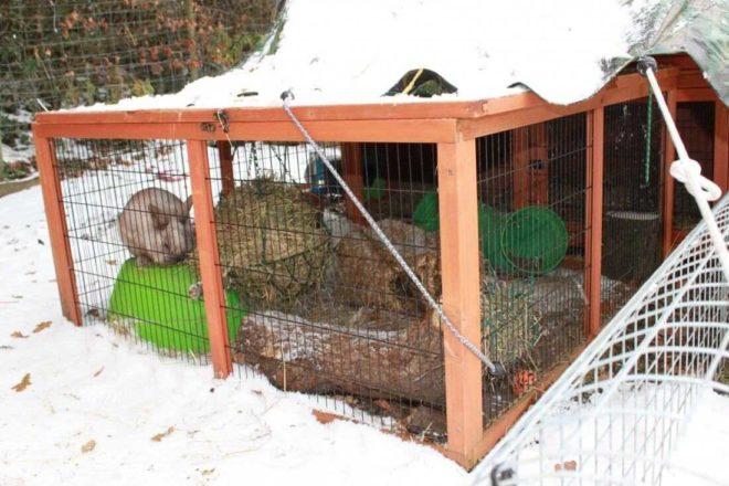 Как содержать кролика зимой
