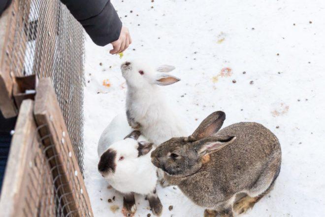 Как кормить кроликов зимой