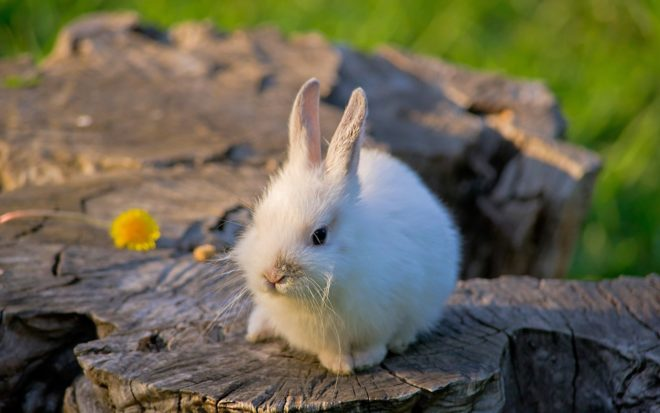 Кролик сидит на пеньке