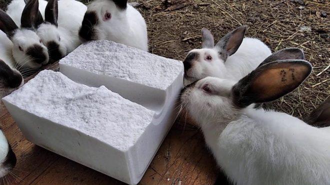 Зачем кроликам нужна соль