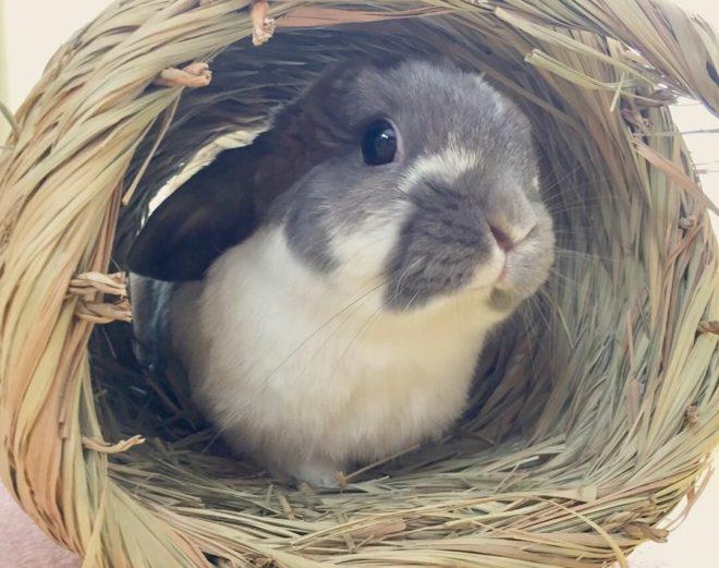 Кролик в гнездышке