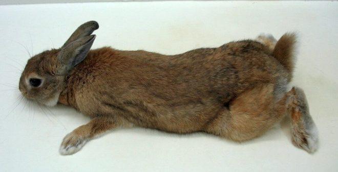 Кролик не может двигаться