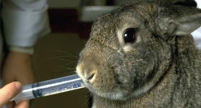 Промывание язв кролику
