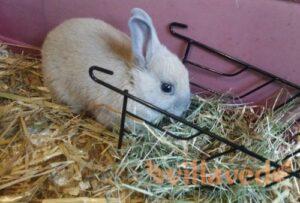 сено, кролик