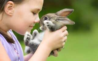 Аллергия на кролика